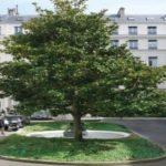 BNP Paribas REIM acquires Square d'Orléans in Paris